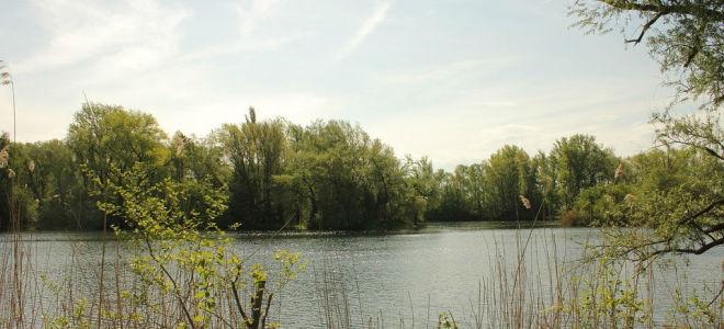 Главные герои рассказа «Васюткино озеро»